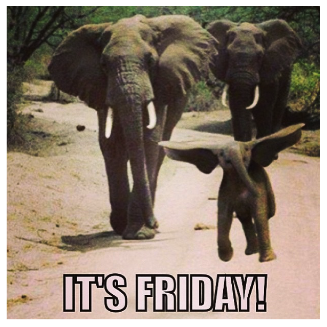 FridayElephant