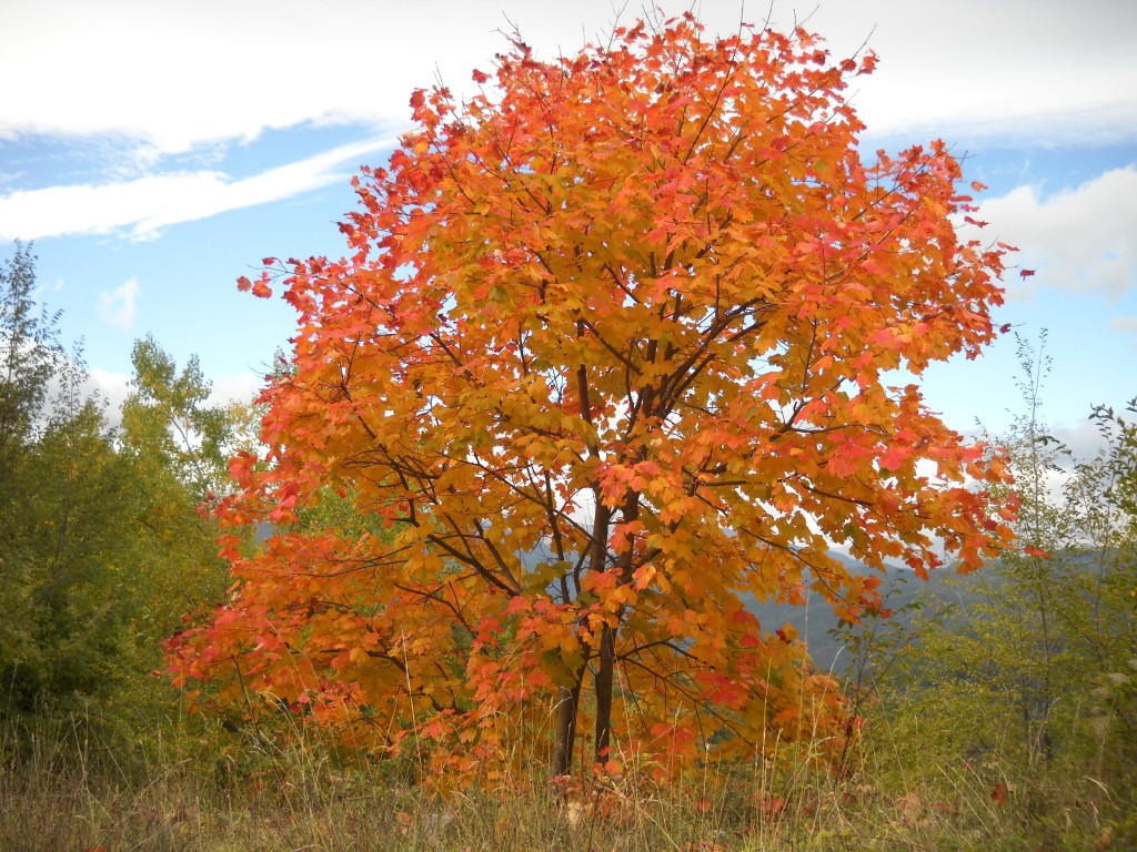 Tree_in_autumn,_Gran_Sasso